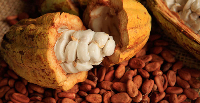 Cacao Butter: Why It's a Top Keto Fat and How to Use It 3 - Belvie Chocolate Viet Nam