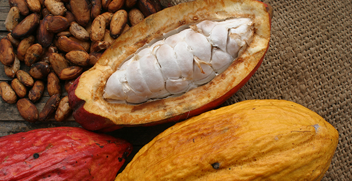Cacao Butter: Why It's a Top Keto Fat and How to Use It 4 - Belvie Chocolate Viet Nam